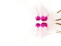 cyclam Стоковые Фотографии RF