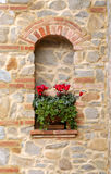 cyclamen цветки Стоковая Фотография
