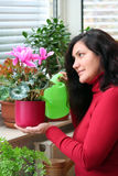 Cyclamen plant care Stock Photo