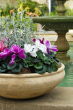 Cyclamen pot and fountain Stock Images