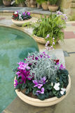 Cyclamen pots ferns and pool Stock Images