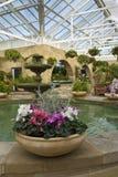 Cyclamen pots in indoor garden Royalty Free Stock Image