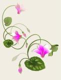 cyclamen rosa tappning royaltyfri illustrationer