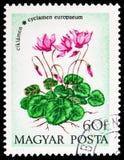 Cyclamen, serie 1973 цветков, около 1973 стоковые фото