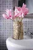 Cyclamen Stock Image