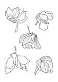 Cyclamens pen drawing set Royalty Free Stock Image