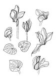 Cyclamens pen drawing set Royalty Free Stock Images