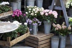 Cyclamens w garnkach na drewnianych pudełkach jako dekoracja kwiatu sklep i róże Fotografia Stock