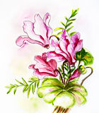 Cyclamens. Watercolor painting. Royalty Free Stock Image