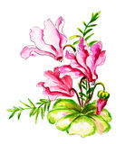 Cyclamens. Watercolor painting. Royalty Free Stock Photo