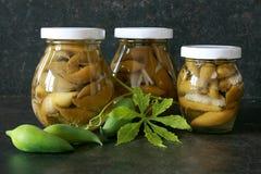 Cyclanthera conservado en vinagre Pedata fotos de archivo libres de regalías