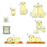 Cycle de la vie du chien Images libres de droits