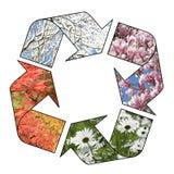 Cycle de quatre saisons Image stock