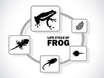 Cycle de vie de grenouille Photos libres de droits