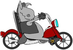 Cycle Donkey Stock Images