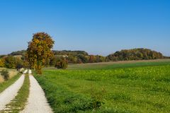 Cycle path and trees in autumn colors long Romantic Road, Germany 2 stock image