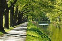 Cycle path by a canal. Cycle path canal water spring green trees reflection fairytale sunshine bike road netherlands royalty free stock image