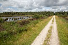 Cycle path in Dutch national park with forest and wetlands stock photos