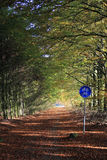 Cycle path in forest. Cycle path in Autumn forest Stock Photo