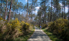 Cycle Path, Landes, France Royalty Free Stock Photos