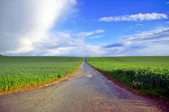 Cycle path in the middle of green grain fields royalty free stock photography