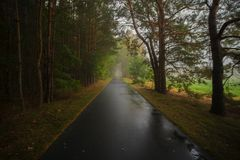 Cycle path after rain in the forest stock image