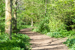 Cycle path in spring sunshine Stock Images