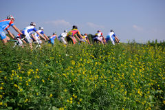 Cycle racers Royalty Free Stock Photography