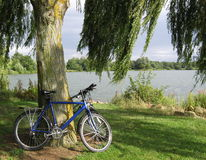 Cycle ride. Bike leaning against a willow tree by a lake Royalty Free Stock Photography