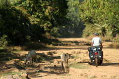 Cycle touring in Cambodia royalty free stock photography