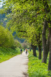 Cycle-track and walking-trail along the Kinzig River Royalty Free Stock Images