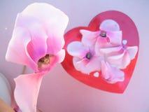 Cycleman blom boxas - abstrakt begrepp - den selektiva fokusen Arkivbilder