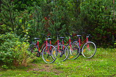 Cycles in forest Stock Photography