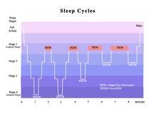 Free Cycles Of Sleep Stock Photo - 128874300
