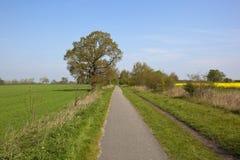 Cycleway in de lente royalty-vrije stock afbeeldingen