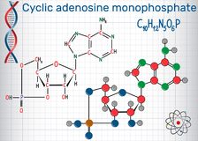 Cyclic adenosine monophosphate cAMP molecule, it is used for i Royalty Free Stock Photo
