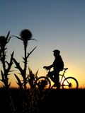 Cycling. Mountain biker girl silhouette in sunrise Stock Photography