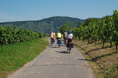 Cycling. In the vineyards in germany Stock Image