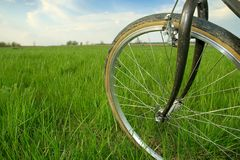 Cycling. Bicycle wheel on a green field Stock Photos