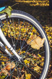 Cycling in autumn park close-up Royalty Free Stock Photos