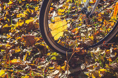 Cycling in autumn park close-up Royalty Free Stock Photography