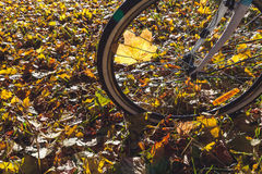 Cycling in autumn park close-up Stock Photo