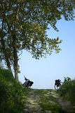 Cycling. Casalmaggiore (Cr), Italy, two becycle along a dirt bike in the floodplain of the River Po Royalty Free Stock Photos