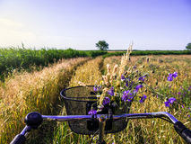 Cycling in cornfield Stock Images