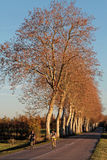 Cycling in countryside of La Dombes. Royalty Free Stock Photos