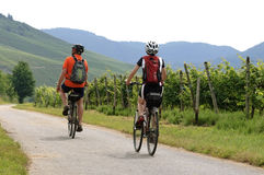 Cycling holiday along vineyards on the river Moselle Royalty Free Stock Images