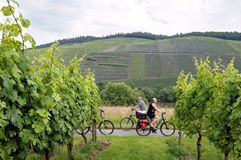 Cycling holiday along vineyards on the river Moselle Royalty Free Stock Photos