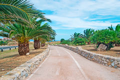 Cycling lane with palms Stock Photography