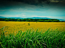 Cycling near these beautiful golden fields in Hungary Stock Photos