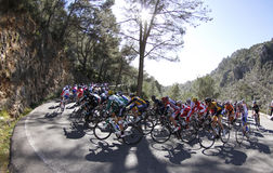Cycling near Caimari wide Stock Image